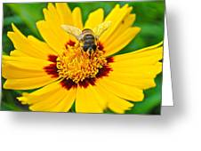 Beeautiful Greeting Card