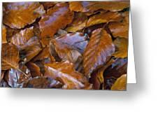Beech (fagus Sp.) Leaves Greeting Card