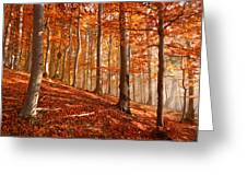 Beech Forest Greeting Card
