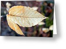 Beech Leaf In Winter Greeting Card