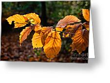 Beech Leaves In Winter Greeting Card
