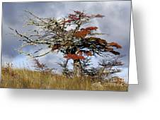 Beech Tree, Chile Greeting Card