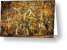 Beech Tree Group In Autumn Light Greeting Card