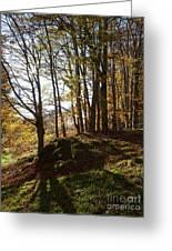 Beech Trees - Autumn Greeting Card
