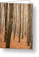 Beech Wood In Autumn Greeting Card