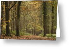 Beech Wood Walk Greeting Card