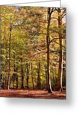 Beeches Greeting Card