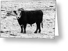 Beef Bandit Greeting Card