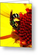 #beegreen Greeting Card
