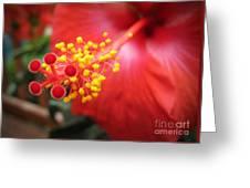 Beelight Greeting Card