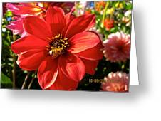 Bee's Dahlia Delight Greeting Card