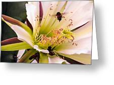 Bees In Blossom Greeting Card