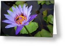 Bees In The Lotus Greeting Card
