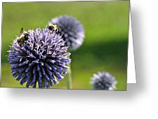 Bees On Globes Greeting Card