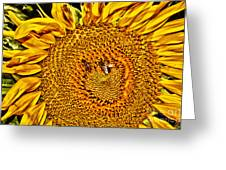 Bees On Sunflower Hdr Greeting Card