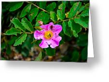 Beetle And Fly On Wild Rose Greeting Card