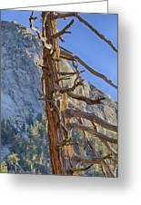 Beetle Barren Pine Greeting Card