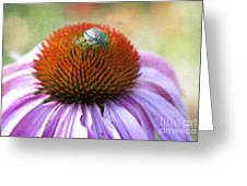 Beetle Bug Greeting Card