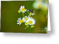 Beetle Life Greeting Card