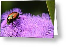 Beetle On A Flower Greeting Card