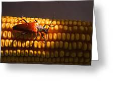 Beetle On Corn Ear Greeting Card