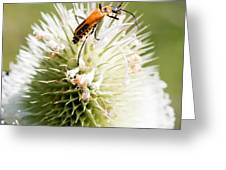 Beetle On White Spiky Wild Flower Greeting Card