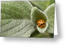 Beetle Pad Greeting Card