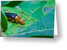 Beetle Sneeking Around Greeting Card