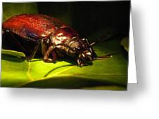 Beetle With Powerful Mandibles Greeting Card