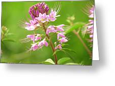Beeweed . . .with Ant Greeting Card by  Feva  Fotos