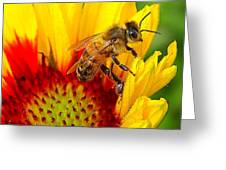 Beezy Bee Greeting Card