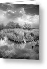 Before The Big Storm Mono Greeting Card