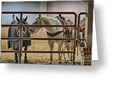 Before The Rodeo Greeting Card