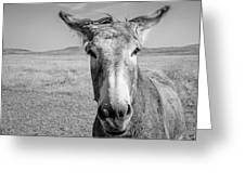 Begging Burro Greeting Card