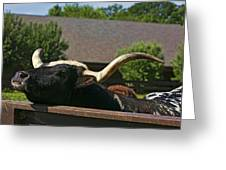 Begging Cow Greeting Card