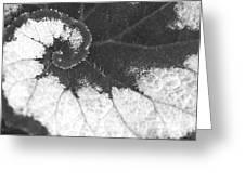 Begonia Escargot Leaf Venation Greeting Card