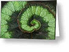 Begonia Leaf 2 Greeting Card