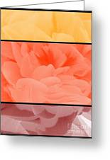 Begonia Petals Triptych Greeting Card