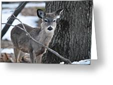 Behind A Branch Greeting Card