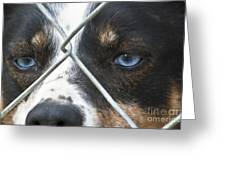 Behind Fences Greeting Card