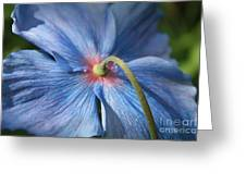 Behind The Blue Poppy Greeting Card