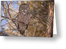Being Observed Greeting Card