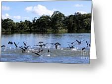 Belconnen Lake Greeting Card