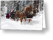 Belgian Draft Horses Pulls A Sleigh In Yosemite National Park Greeting Card