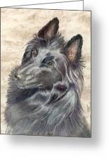 Belgian Sheepdog Greeting Card