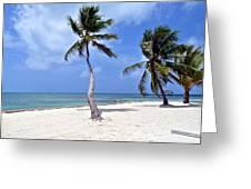 Beautiful Belize Palms Greeting Card