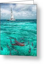 Belize Turquoise Shark N Sail  Greeting Card