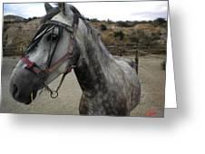 Bella On The Ranch Almanzora Mountain Spain  Greeting Card