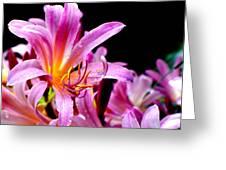 Belladonna Lilies Greeting Card