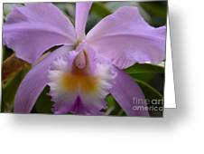 Belle Isle Orchid Greeting Card